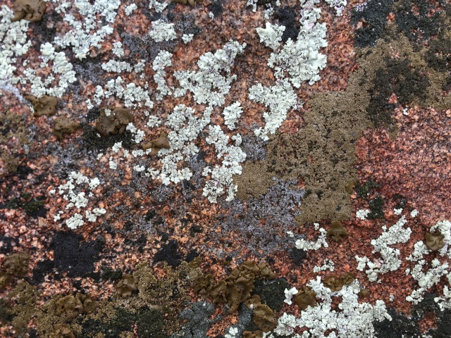 Click to enlarge to see detail of individual lichens