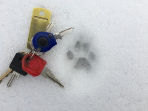 small canine tracks