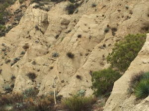 the beauty of erosion patterns on an exposed side of the canyon
